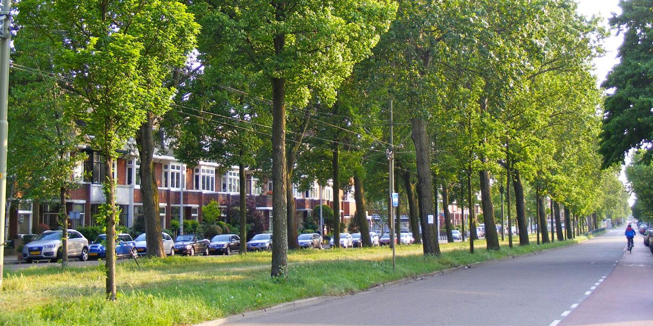 Duurzaam voortbestaan van de populieren aan de Laan van Meerdervoort ter discussie
