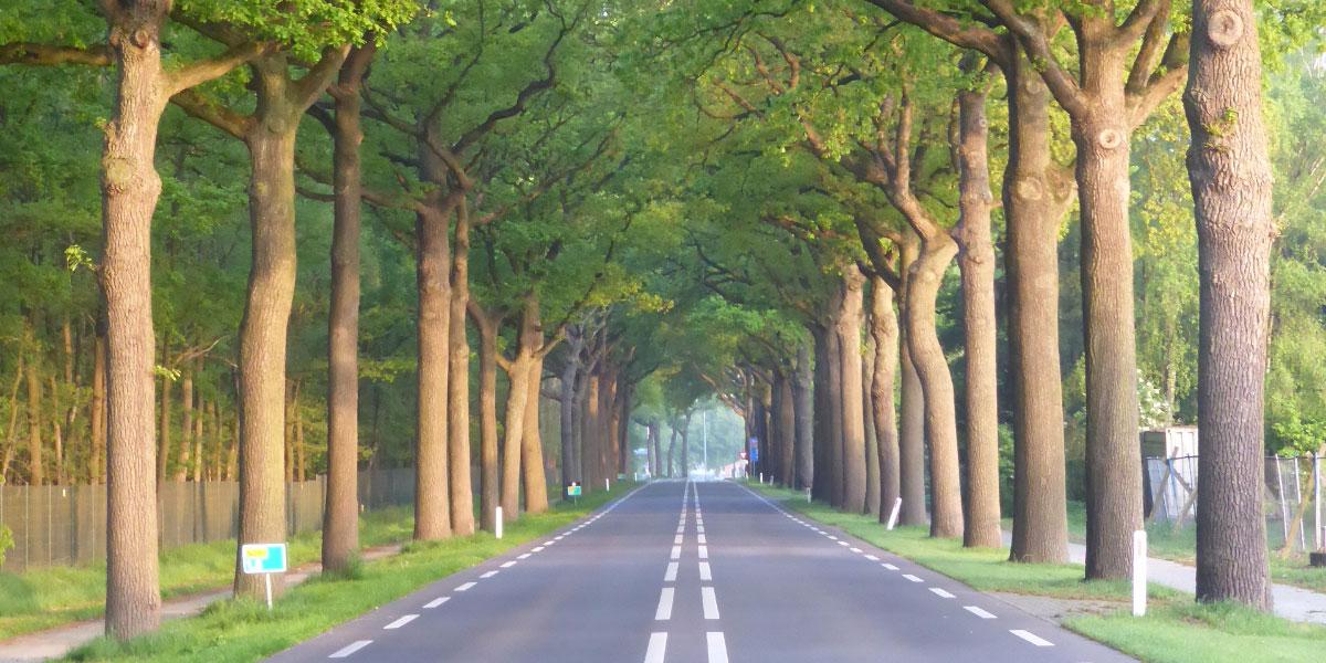 stop-de-bomenkap-langs-N-wegen-1200x600