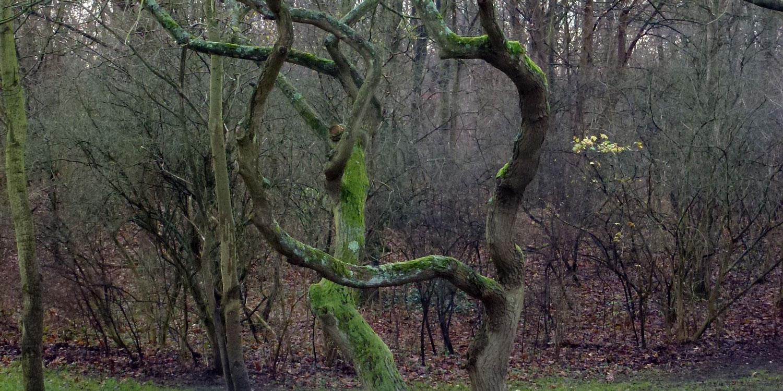 fraaie-boomvormen-moeten-wijken-voor-11-23-m-brede-pad3-1500x750