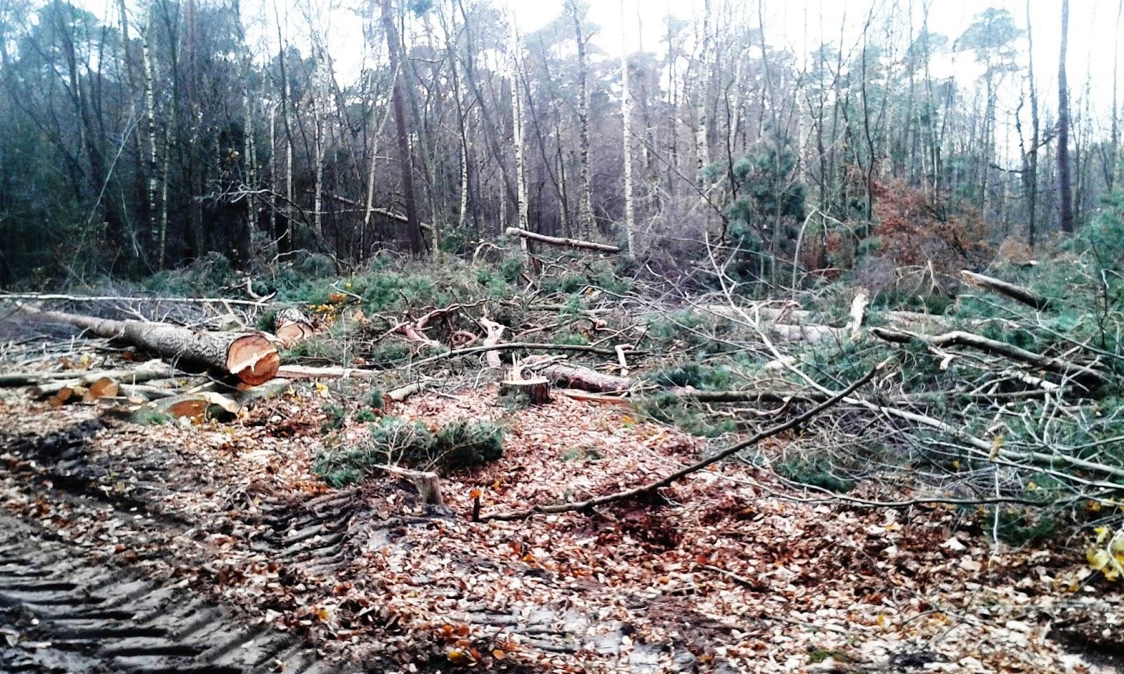 Help massale bomenkap voorkomen