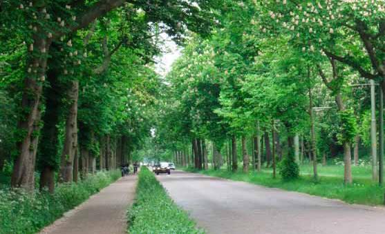 scheveningseweg