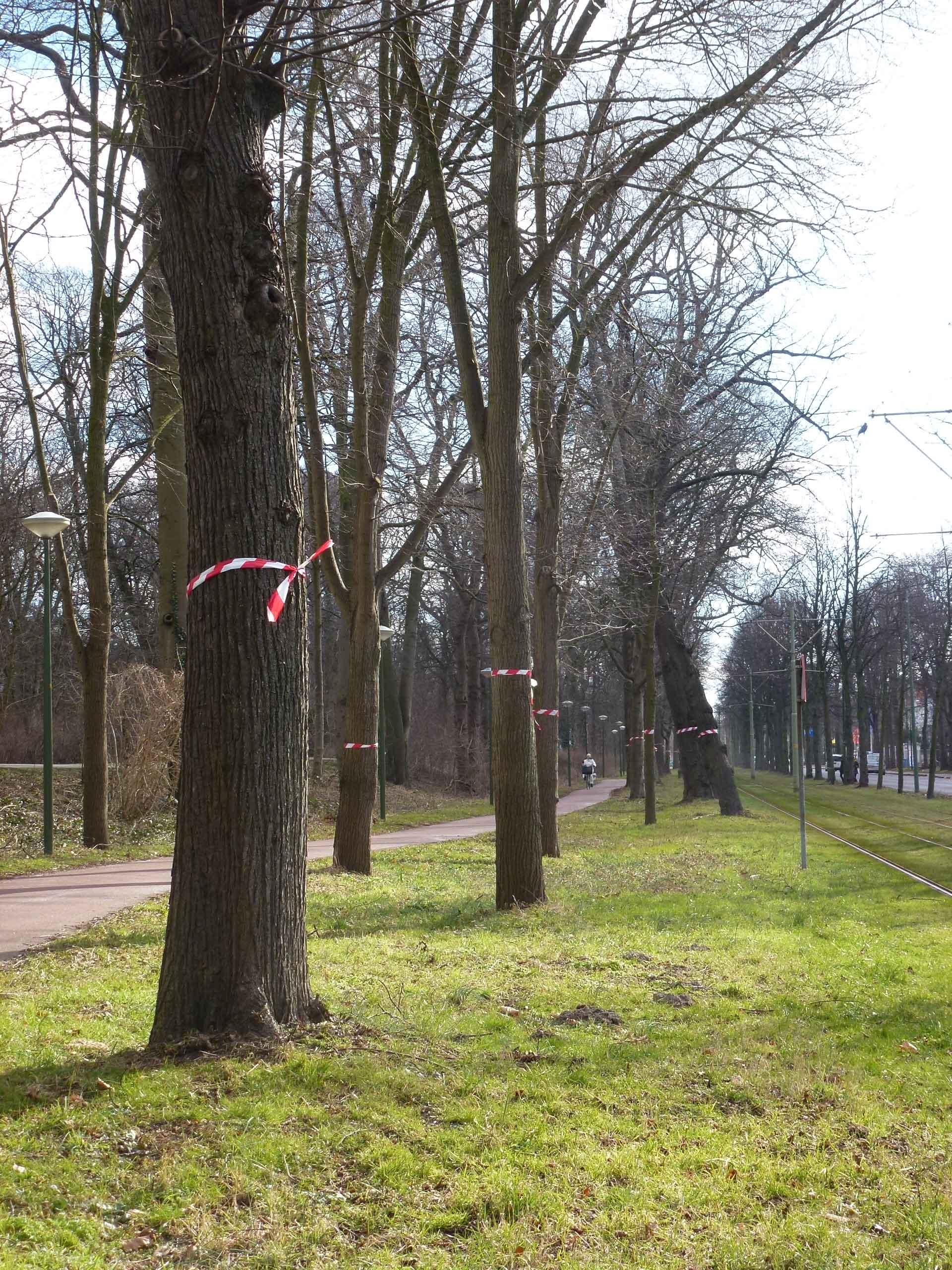 scheveningseweg-linten-bo-w