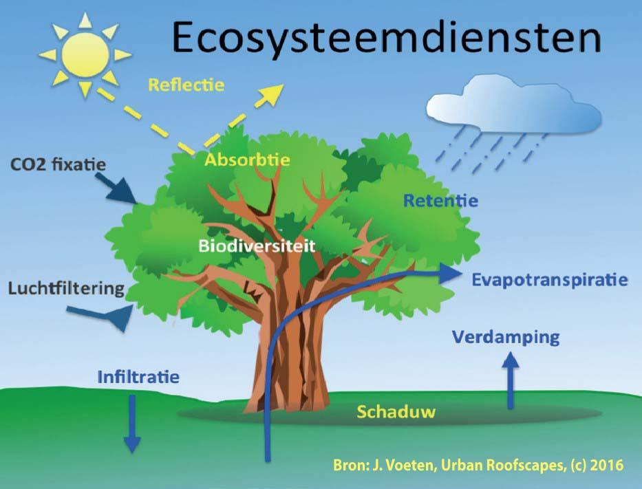ecosysteemdiensten-j-voetenkopie
