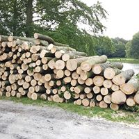 Klimaatakkoord leunt onterecht teveel op biomassa